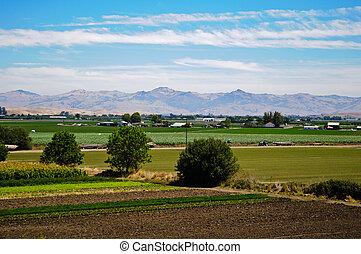 mezőgazdaság, tanya, alatt, kalifornia