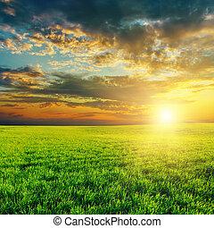 mezőgazdaság, zöld terep, és, napnyugta