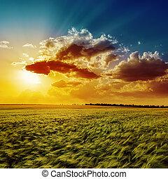 mezőgazdaság, zöld terep, és, narancs, napnyugta