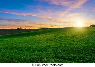 mezőgazdasági, zöld, naplemente terep, felett