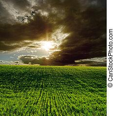 mezőgazdasági, zöld terep, és, drámai, napnyugta