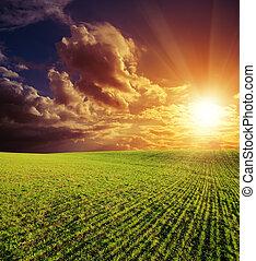 mezőgazdasági, zöld terep, és, jó, piros naplemente