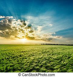 mezőgazdasági, zöld terep, és, naplemente felhő
