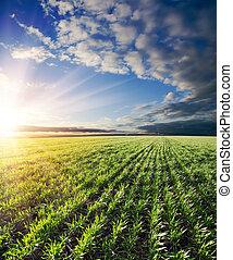 mezőgazdasági, zöld terep, és, napnyugta