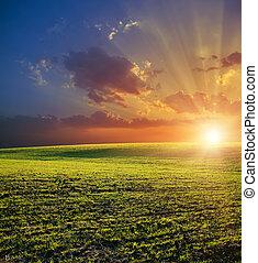 mezőgazdasági, zöld terep, és, piros naplemente