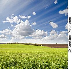 mezőgazdasági, zöld terep, alatt, cloudy ég