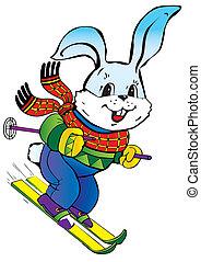 mezei nyúl, skiing.