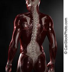 meztelen, ember, noha, látható, izmok, és, gerinc
