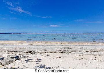 mezzogiorno, sole, sopra, il, corallo, costa, di, figi