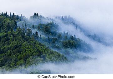 mgła, lato, mgła, prospekt, świeży, rano, forest., antena