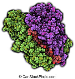 MHC II immune system protein with deamidated gluten peptide bound. Important in celiac disease (gluten sensitive enteropathy). Atoms are represented as spheres. Colored per chain.