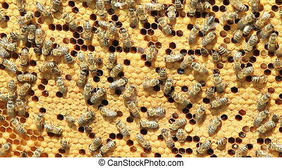 miód, rój, pszczoły, produkcja