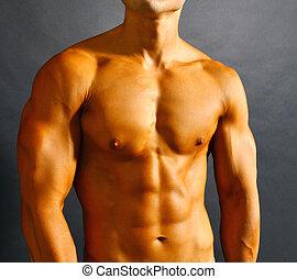 mięśnie, brzuszny