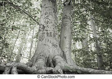 miłość, drzewo