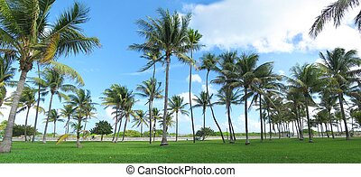 Miami beach panorama - Panorama of grass and palm treest at...