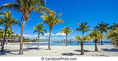 miami, florida, park, matheson, graafschap, hangmat, strand,...