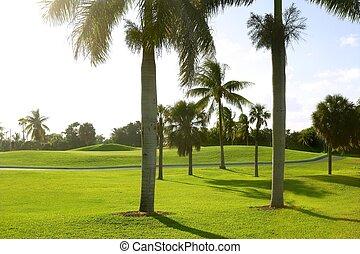 miami, klucz biscayne, golf, tropikalny, pole