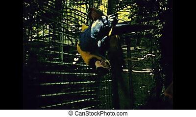 Miami park parrots - South American parrots touristic...