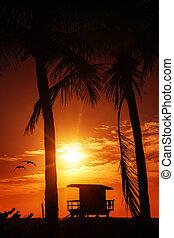 miami, südlicher strand, sonnenaufgang, mit, rettungsschwimmer turm