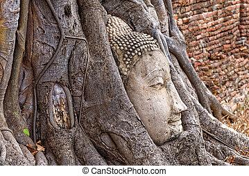 miasto, budda, strój, głowa, drzewo, kamień, wielki, podstawy, -, ayutthaya