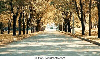 miasto, klasyk, rocznik wina, para, park, jesień, bicycles, unrecognizable, jeżdżenie