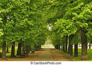 miasto park, europejczyk