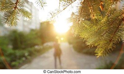 miasto, pieszy, powolny, motion., zachód słońca, aparat fotograficzny., dziewczyna, strój, przypadkowy, szczęśliwy