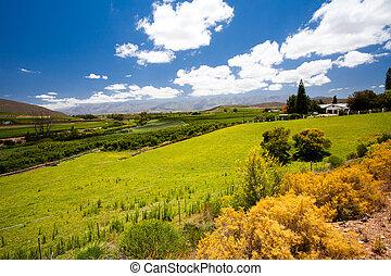 miasto, przylądek, winelands, krajobraz