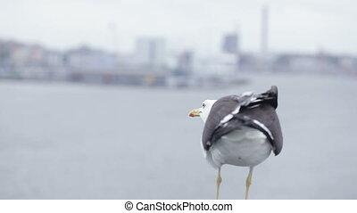 miasto, seagull, tło