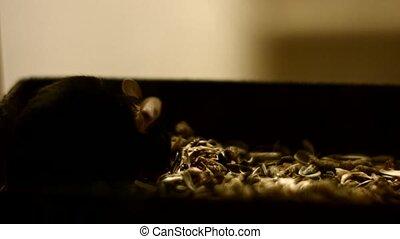 Mice in the dark