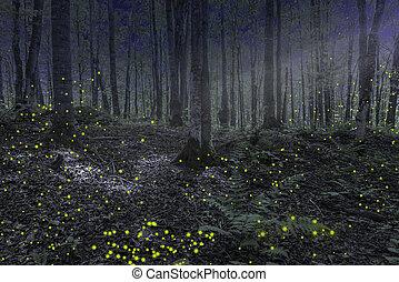 michigan , δάσοs , νύκτα