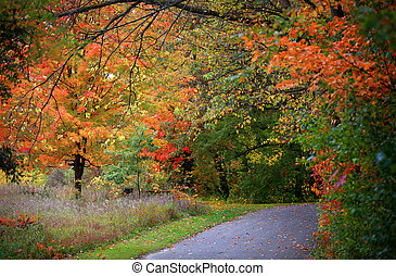 Michigan fall - Scenic trail through a park in Michigan