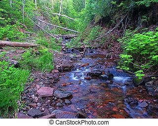 michigan., jacobs, dense, ruisseau, nord, forêts, riffles