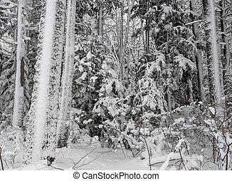 michigan, northwoods, invierno, bosque