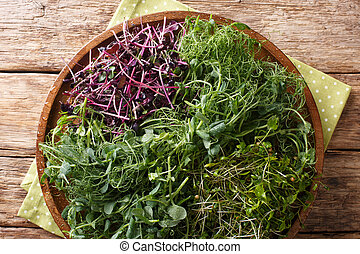 Micro green mix of peas, cilantro, mustard, radish close-up on a plate. horizontal top view