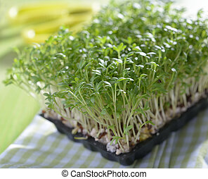 Micro greens - Garden cress growing on a tray