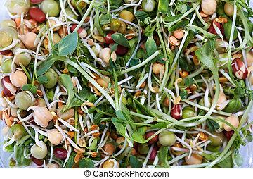 micro, groente, salad.