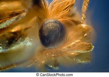 moth - micro photo: detail of moth