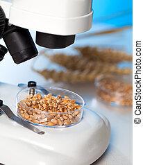 microbiological, nourriture, essai, qualité