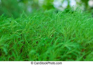 microbiota, flora, verbreiding, microbiota, macrophotography...