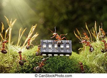 microchip, juegue música, fairytale, hormigas