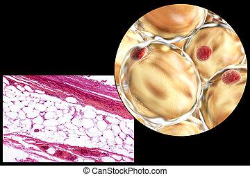 micrographe, 3d, graisse, illustration, cellules