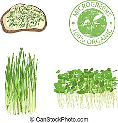 Microgreen sprouts for healthy food.
