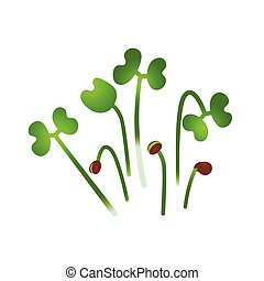 Microgreens Chinese Cabbage. Bunch of plants. White background