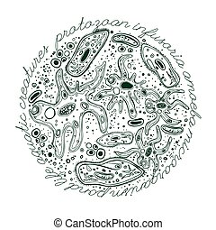 Microorganism Hand drawn Image - Microorganisms hand-drawn...