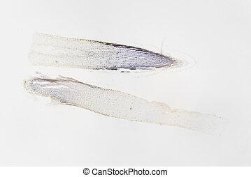 Microscopic photography. Root of allium cepa, transversal...