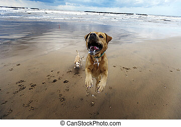 Mid-Air Beach Dog - Beautiful afternoon at the beach on a...