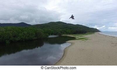 An aerial shot above a white beach sand. A bird crosses the drone.