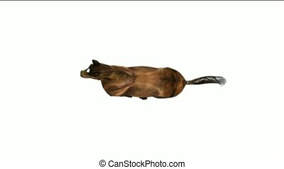 mid-air, het overzien, een, paarde, rennende