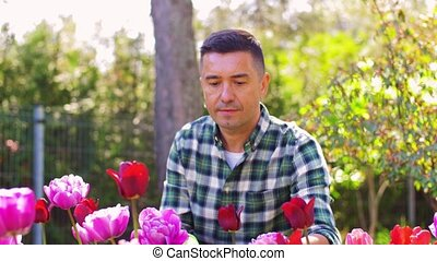 middle-aged man taking care of flowers at garden